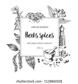 spices square frame design. hand painted illustration. Vintage sketchy style plants. Vector illustration of black pepper; allspice; cardamom