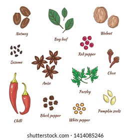 Spices vector illustration hand drawing set.  Herbal and food collection. Walnut and nutmeg, bay leaf and pepper, sesame and anise, parsley and clove, chilli and pumpkin seeds. Fresh menu concept.