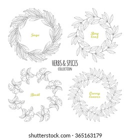 Spicy herb circle frames collection. Hand drawn sage, bay leaf, basil, curry. Kitchen background. Vector illustration