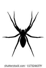 Spider black silhouette isolated on white background. Spooky insect logo illustration, halloween icon vector eps 10