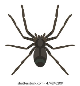 Spider silhouette arachnid fear graphic and spider flat silhouette scary, animal poisonous design. Black spider silhouette nature phobia insect danger silhouette vector icon.