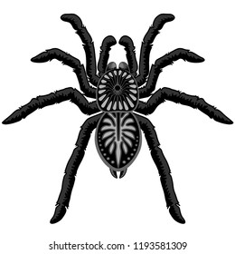 Spider Tarantula Black Widow Tattoo Style Black and White Decorative Isolated