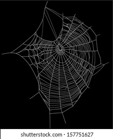 spider web detailed vector illustration - white threads over white