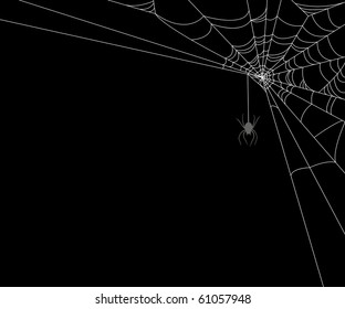 Spiderweb and spider on black background