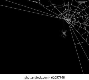 Spiderweb and spider on black background