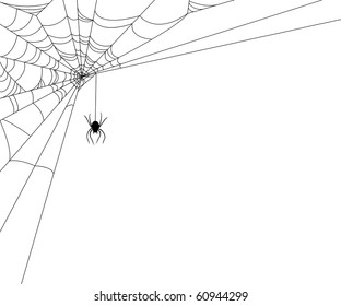 Spiderweb and spider on white background