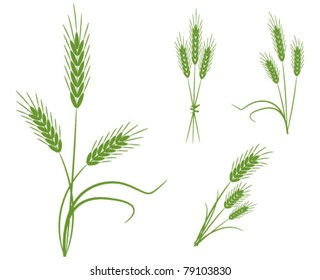 Spikes cereals - the concept of agriculture