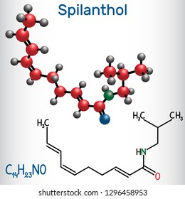 Spilanthol molecule. It is a fatty acid amide, is used for the local anesthetic properties and in cosmetology.  Structural chemical formula and molecule model. Vector illustration