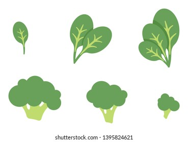 Spinach and broccoli set vector illustration
