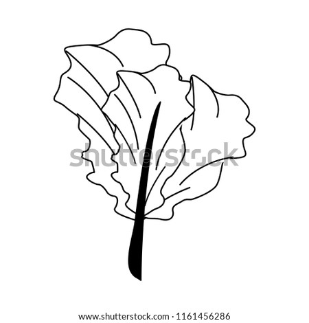 Spinach Fresh Vegetable Black White Stock Vector Royalty Free