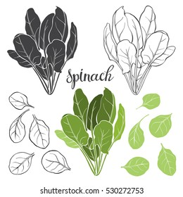 Spinach, isolated vector elements on a white background.
