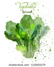Spinach salad leaves watercolor Vector. Delicious colorful designs