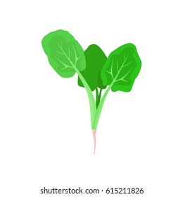 Spinach vector