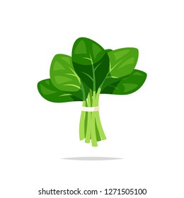 Spinach vegetable vector isolated