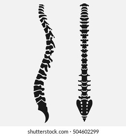 Spine emblem, anatomy human, clinic icon, diagnostic center