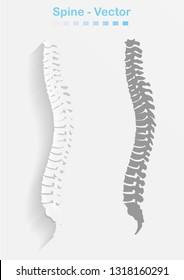 spine structure of human body.spine diagnostic symbol, design, sign. Diagnostic center