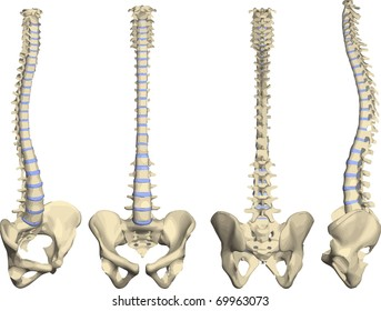 spine vector with pelvis in four positions