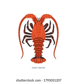 Spiny lobster, langouste or lobster with long antennae and without claws. Simple Colorful vector illustration in flat cartoon style on white background.