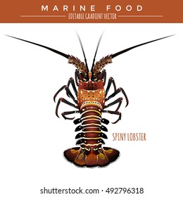 Spiny Lobster. Marine Food