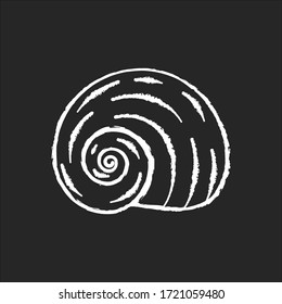 Spiral shell chalk white icon on black background. Gastropod seashell, conchology Empty molluscan animal cockleshell, common snail conch, moonshell isolated vector chalkboard illustration