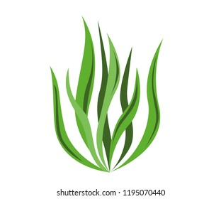 Spirulina algae icon on white background. Vector Illustration.