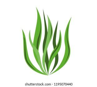 Spirulina algae icon on white background. Vector Illustration.
