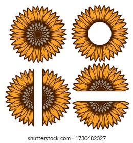 Split sunflower for design, half flower