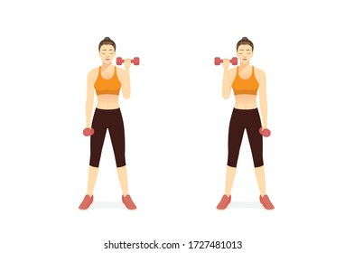 Sport Women doing Fitness with the dumbbell curl in left and right arm. Illustration about Build Muscle and Boost metabolism with  Weighted Workout. target to bicep muscles.
