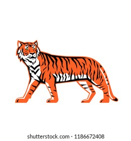 Sports mascot icon illustration of a full body Bay of Bengal tiger, a Mainland Asian tiger walking viewed from  side on isolated background in retro style.