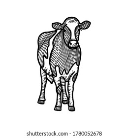Spotted calf sketch. Black and white hand drawing. Vintage vector engraving illustration for poster, web. Isolated on white background