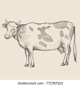 The spotted cow is standing. View in profile. The drawing is drawn by hand with ink and a pen. Tracing