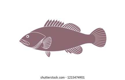 Spotted Grouper.  Isolated grouper on white background