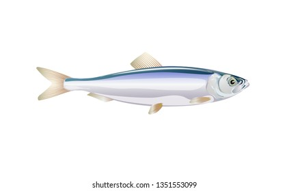 Sprat, brisling fish isolated on light background. Fresh fish in a simple flat style. Vector for design seafood packaging and market illustration. EPS10. Marine life or water nature.