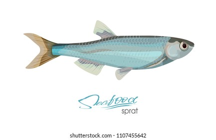 Sprat sketch vector fish icon. Isolated marine atlantic ocean sprats. Isolated symbol for seafood restaurant sign or emblem, fishing club or fishery market