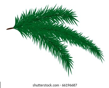 Sprig of fir-tree on a white background/vector texture/ Isolated