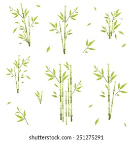 sprigs of bamboo of different lengths , height, on a white background