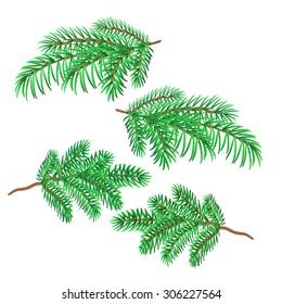 Sprigs of spruce christmas decorations symbol celebration vector illustration  - Shutterstock ID 306227564