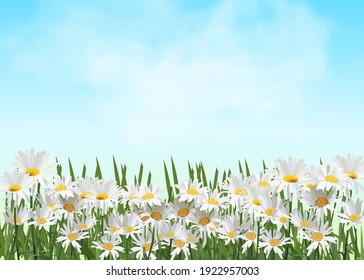 Spring background with chamomile flowers, green grass, blue sky. Can be used for Easter, birthday, wedding, anniversary, March 8, women s day. Seasonal sales