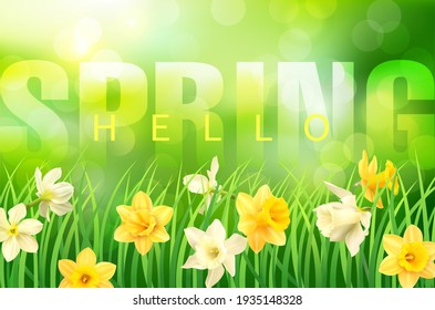 Spring background with green grass, daffodils and greeting. Vector illustration.