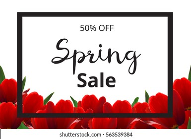 Spring banner with red flowers on white background. Spring sale banner. Red tulips. Vector illustration.