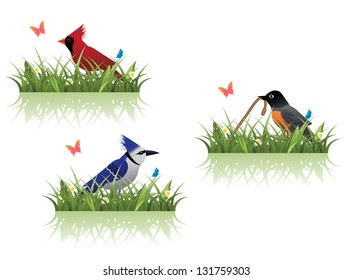 Spring Birds and Grass. EPS8 vector, grouped for easy editing. No open shapes or paths.