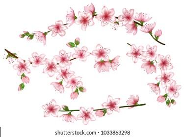 Spring bloom branches with pink flowers, buds vector illustration. Realistic design isolated on white. Bloom cherry tree twigs set, blossom collection. Apple, peach, sakura, apricot flowering branches