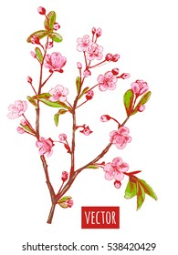 Spring blossom (bloom), branch with pink flowers (cherry, plum, almonds), hand draw sketch, on white background, vector illustration, vintage