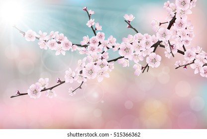 Spring blossom cherry tree branches with pink flowers. On blurred pink, blue background.