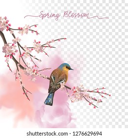 Spring Blossom. Flowering plum branch and bird in springtime on a transparent watercolor background