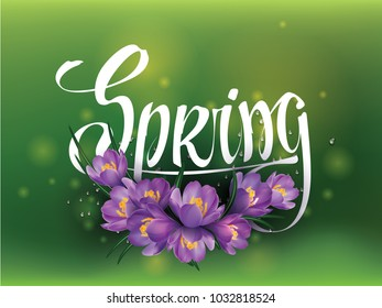 Spring calligraphy with violet crocus flowers. Hand drawn brush lettering composition on green background. Bouquet of crocuses. Artistic tittle for fashion social media, blog, flyer, poster.