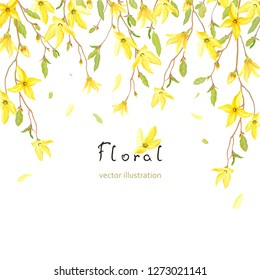 Spring card for your text with blossoming yellow flowers and green leaves on branches Forsythia. Vector tender background in watercolor style.