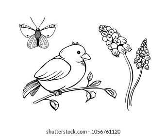 Spring collection. Vector engraving  illustration of butterfly, bird on the brunch and muscari flowers