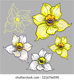 Spring colorful flowers Daffodils isolated on grey background .Can be used as elements design for printing on wrapping paper, creating card, invitation card for wedding, napkins. Vector illustration.