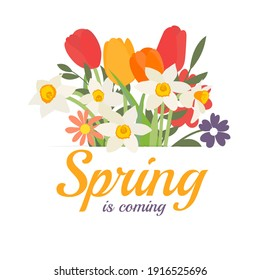 Spring is coming background with Bouquet of spring flowers tulips and daffodils. Vector Illustration